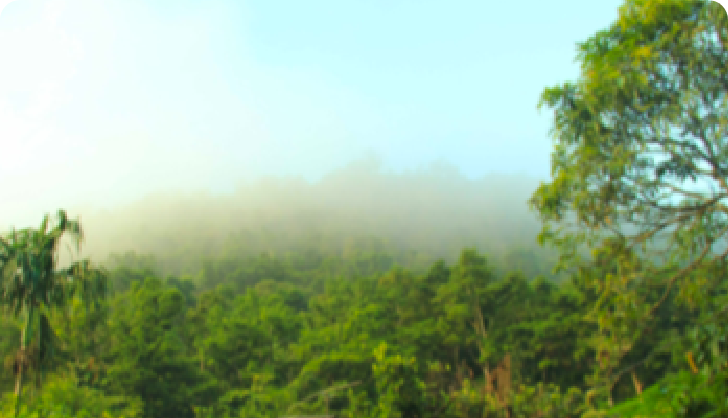 Forest Protection and Preservation